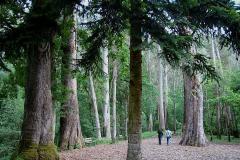eucaliptos-chavin